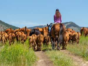 Hidden Hollow Hideaway gal pushing cattle on horseback down two track dirt road