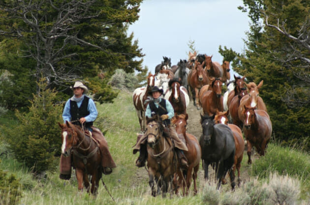 Two people riding horses with a large group of horses running behind them