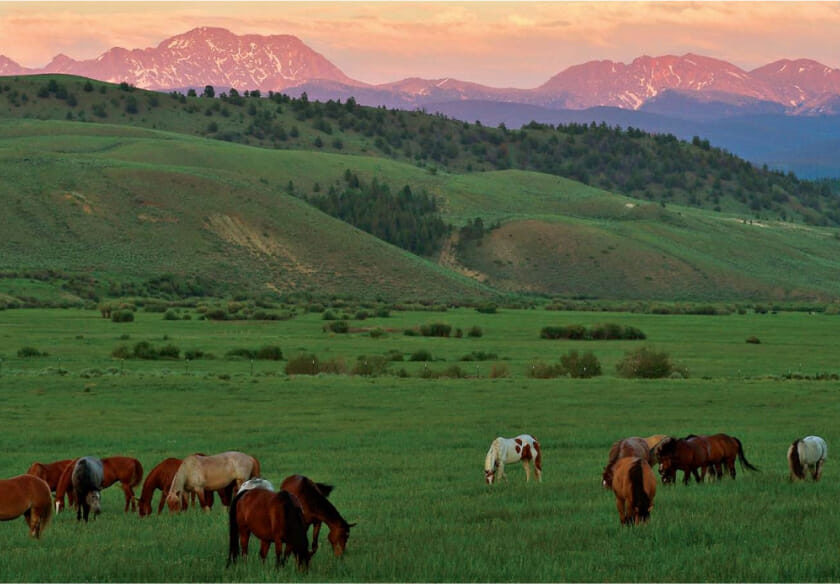 Group of horses grazing in a field with mountains in the background