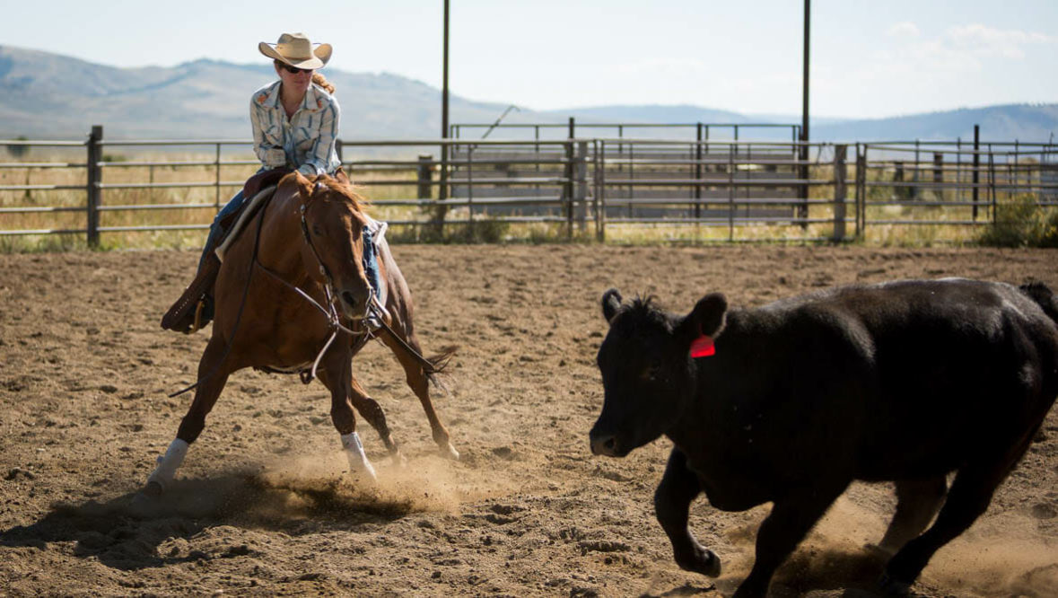 Cowgirl roping cattle in arena at A Bar A Ranch