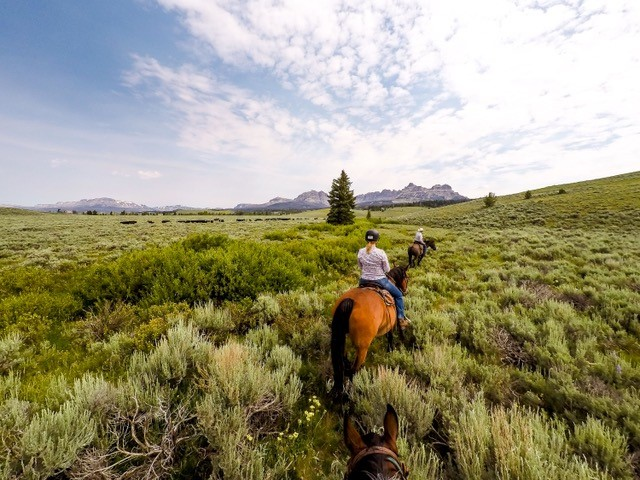 Absaroka Trail Ride