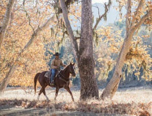 Person on a horse riding under a tree at Alisal Guest Ranch