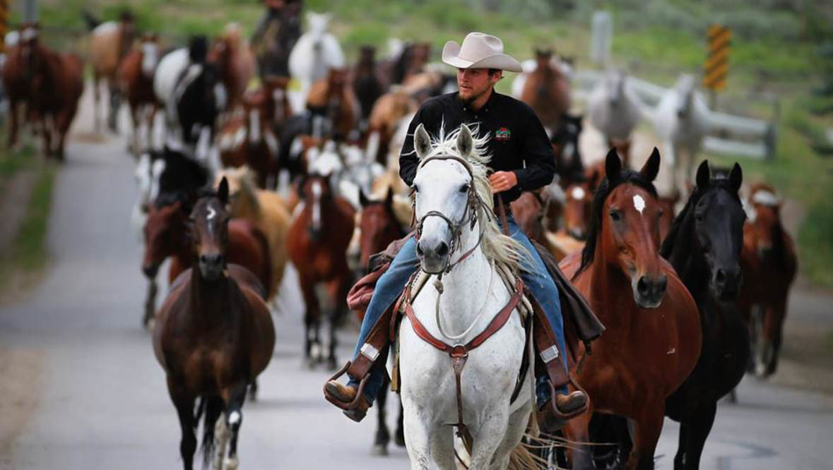 Cowboy leading a gather of horses at Bar Lazy J Ranch