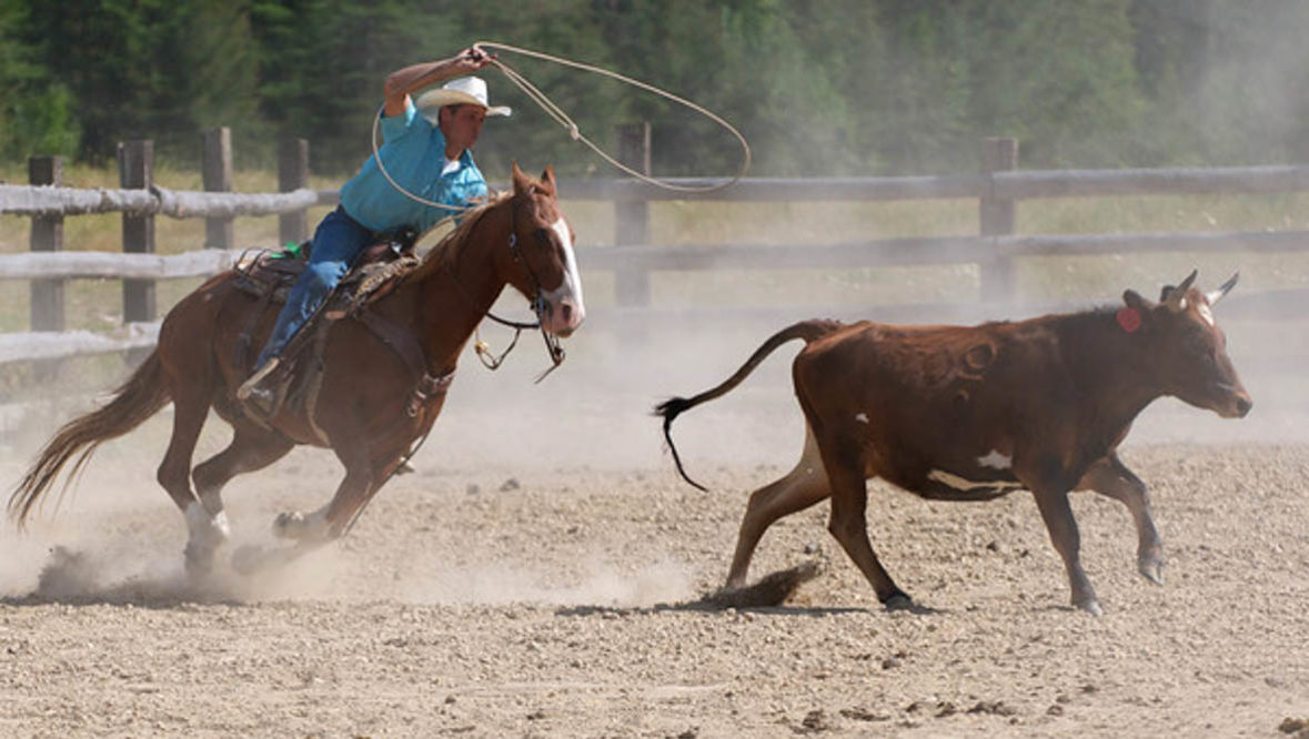 Cowboy roping a cattle in an arena at Bar W Ranch