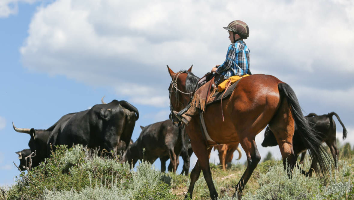Kid on a cattle drive at Black Mountain Ranch