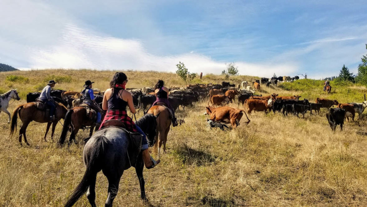 Cowgirl on a cattle drive at Bull Hill Ranch