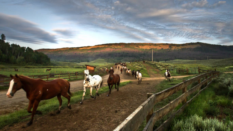 Gather of. horses running at C Lazy U Ranch