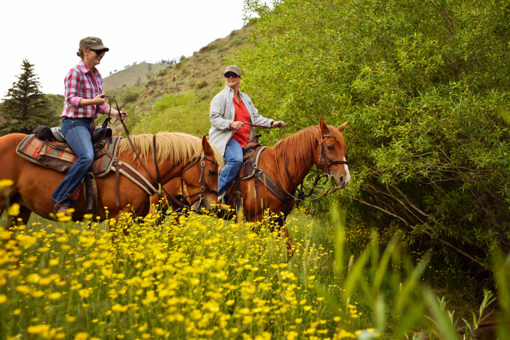 Horses and riders in a field of wildflowers