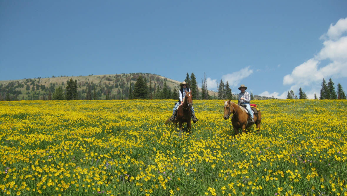 Guests on horses in a field of wildflowers at Elkhorn Ranch Montana