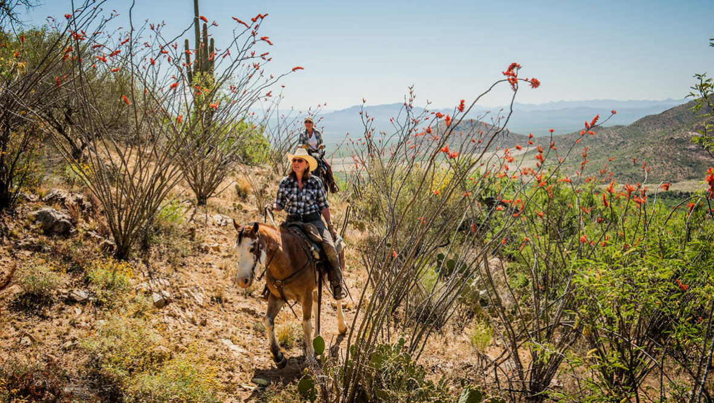 Desert trail ride at Elkhorn Ranch Arizona