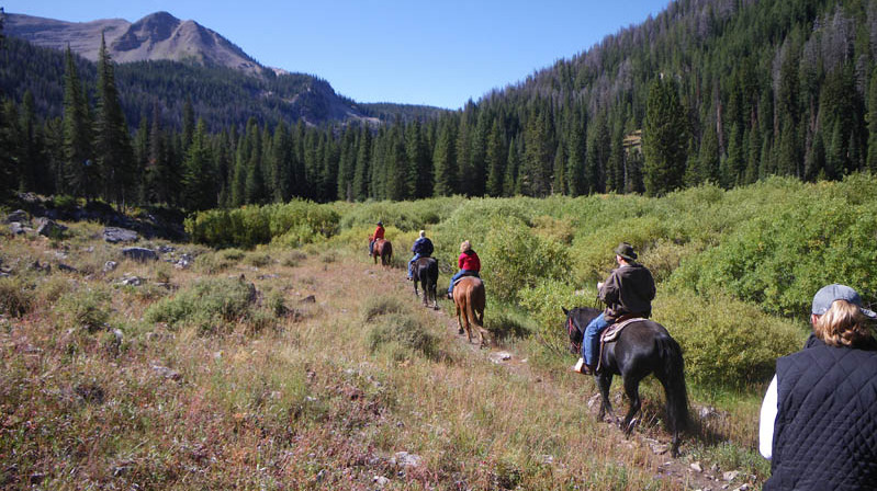 trail ride through green willows