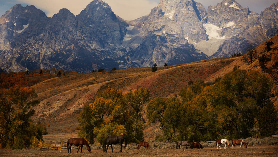 Horses grazing in a pasture with a mountain view at Gros Ventre River Ranch