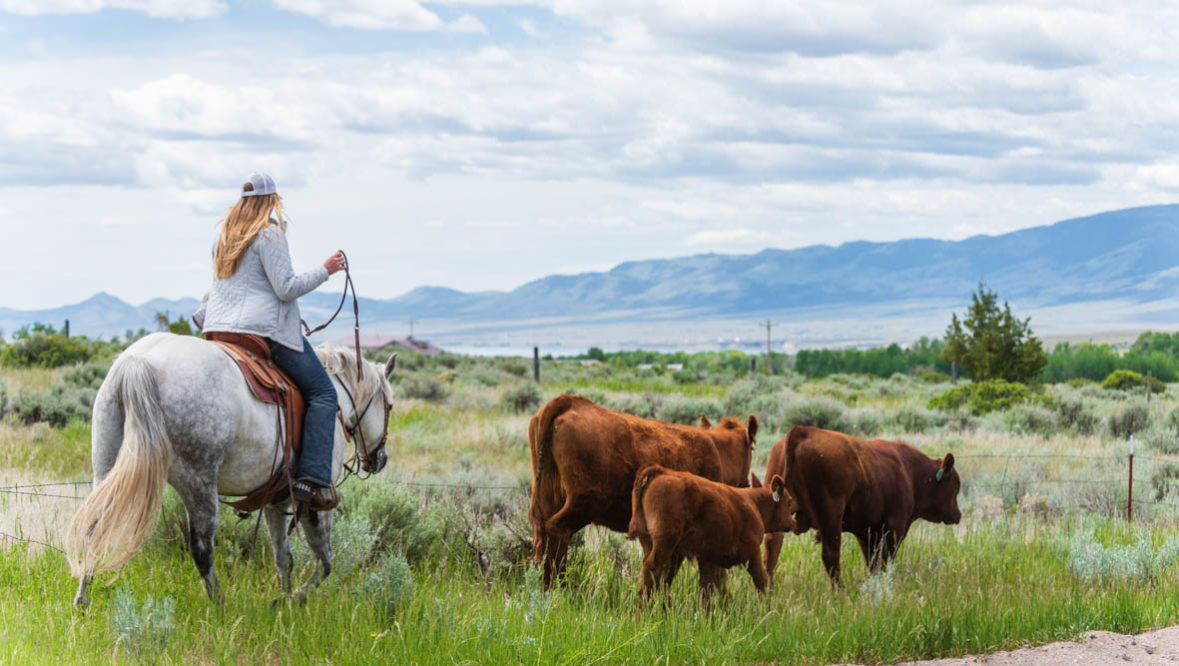 Cattle drive with Cowgirl at Hidden Hollow Ranch