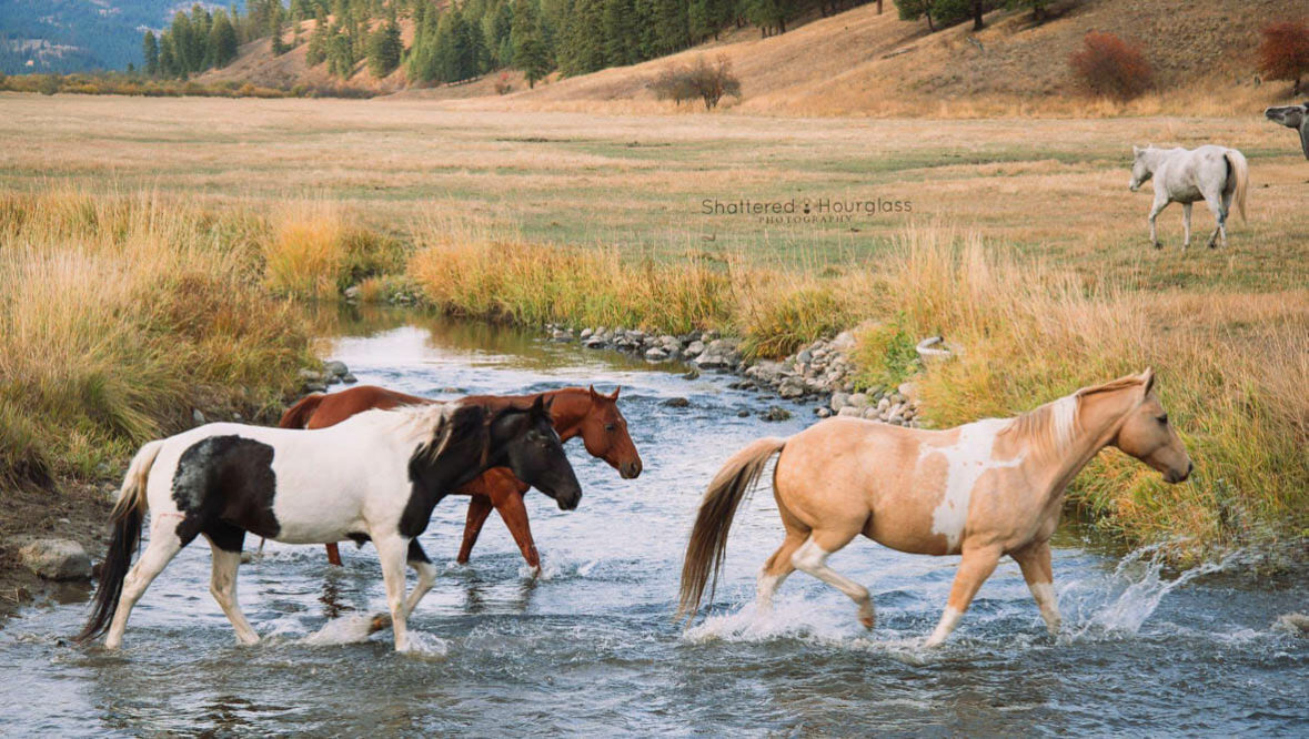 Horses crossing a creek at K Diamond K Ranch