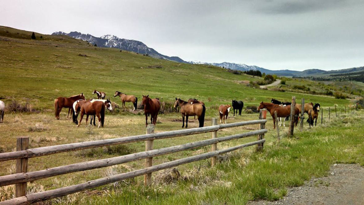 Horses grazing in a pasture at Hubbards Ranch