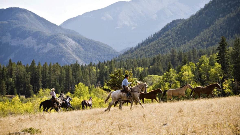 Horse gather at JJJ Wilderness Ranch