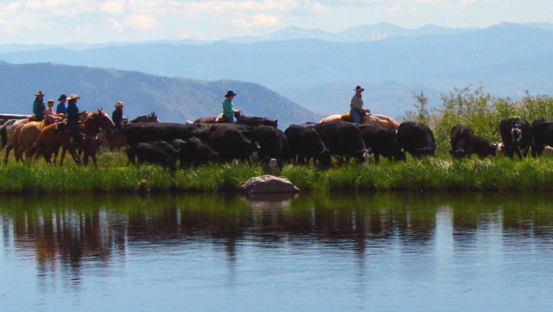 Trail ride next to a river at Latigo Dude Ranch