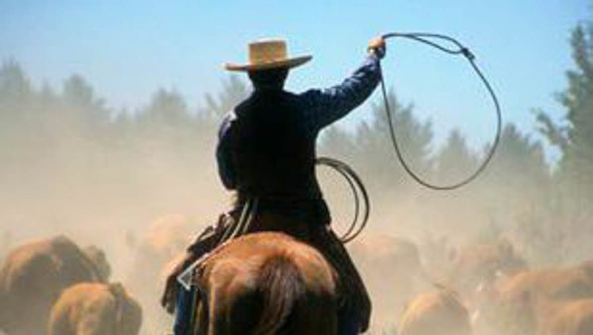 Cowboy roping at Long Hollow Ranch