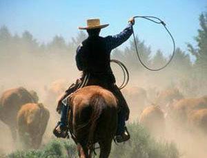 Cowboy roping at Long Hollow Ranch