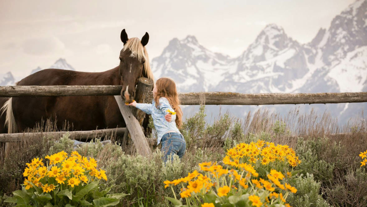 Young girl amongst wildflowers petting a horse through a fence at Lost Creek Ranch