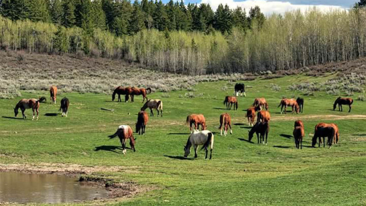 Horses grazing in pasture at McGarry Ranch