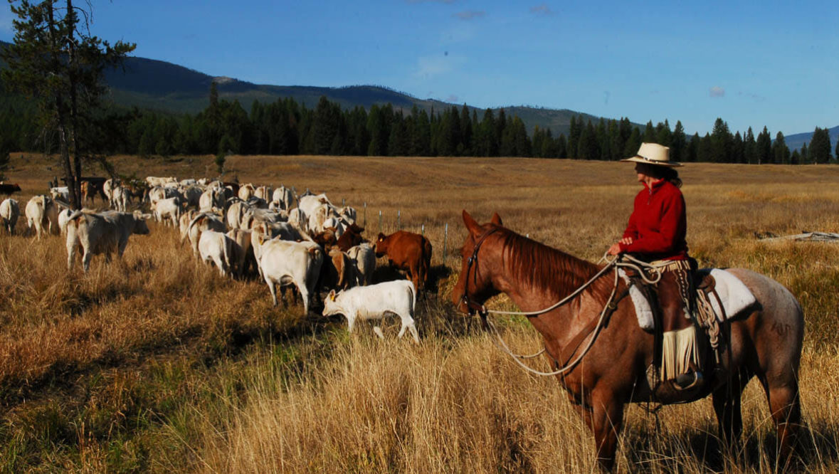 Cowboy in a field with cattle at McGinnis Cattle Ranch