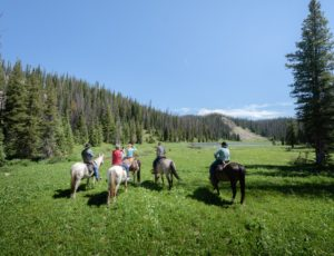 Medicine Bow Ride through Field