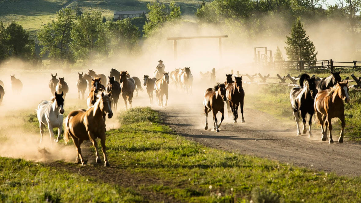 Gather of horses running at Parade Rest Ranch