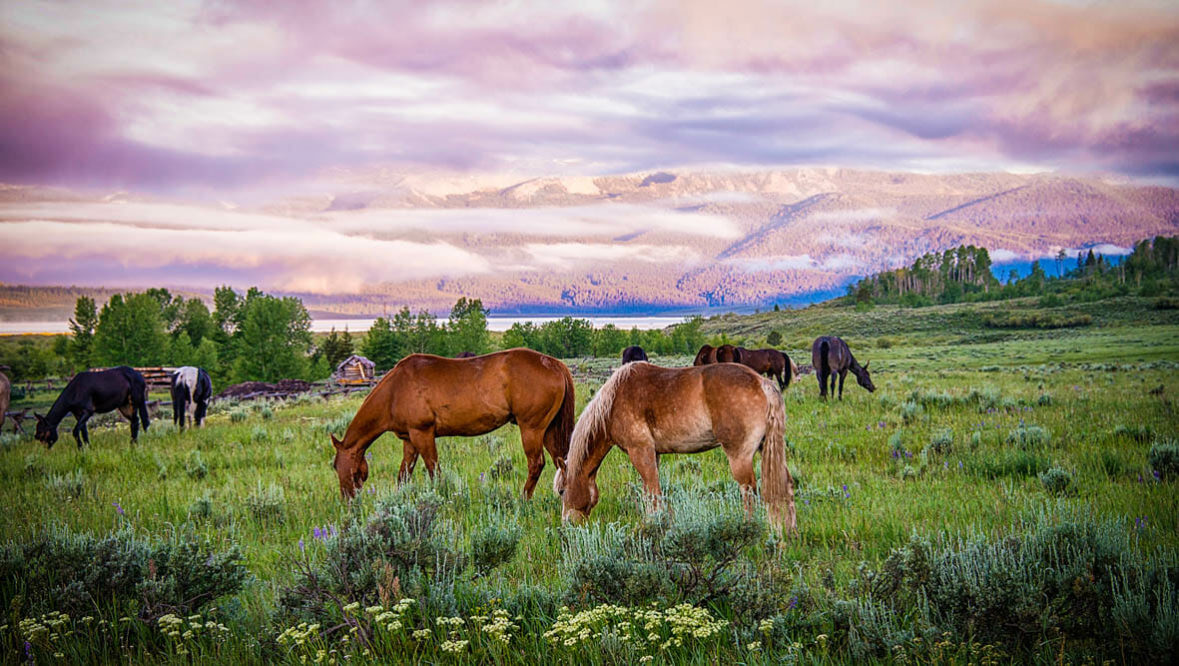 Horses grazing at Parade Rest Ranch