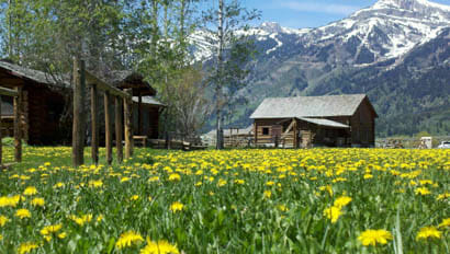 Lodge in a filed of flowers with mountains behind at R Lazy S Dude Ranch