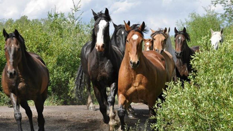 Horses running at R Lazy S Dude Ranch