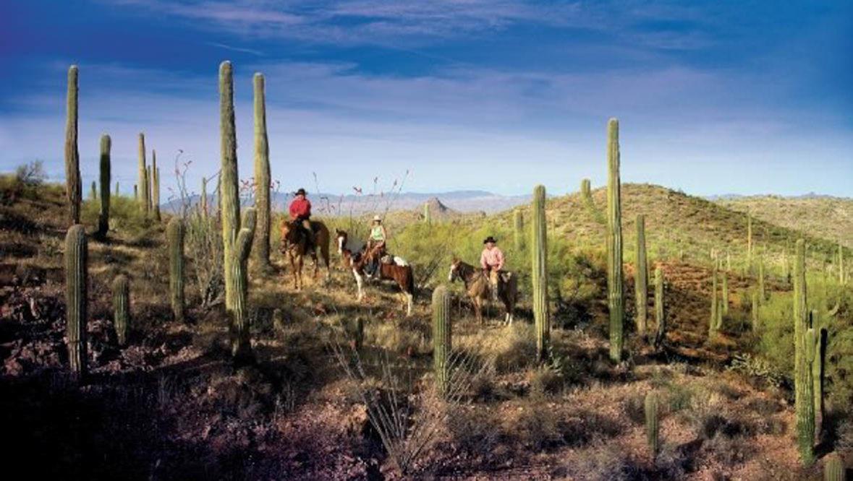 Cactus trail at Rancho de los Caballeros