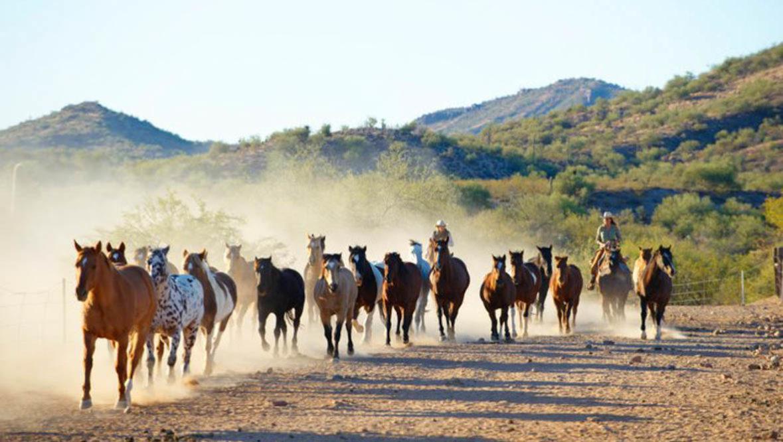 Gather of horses running at Rancho de los Caballeros