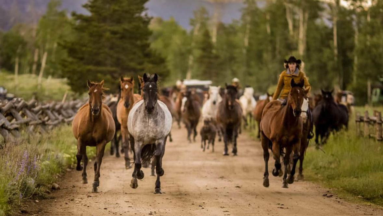 Rawah Ranch horses running
