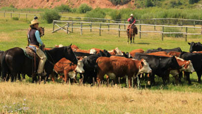 Red Rock Ranch cattle work