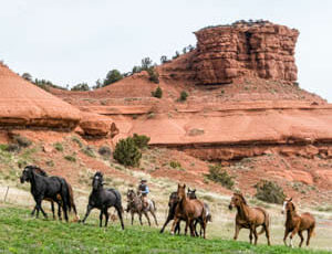 Gathering horses at Red Reflet Guest Ranch