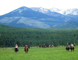 Gather of horses at Rich's Montana Guest Ranch