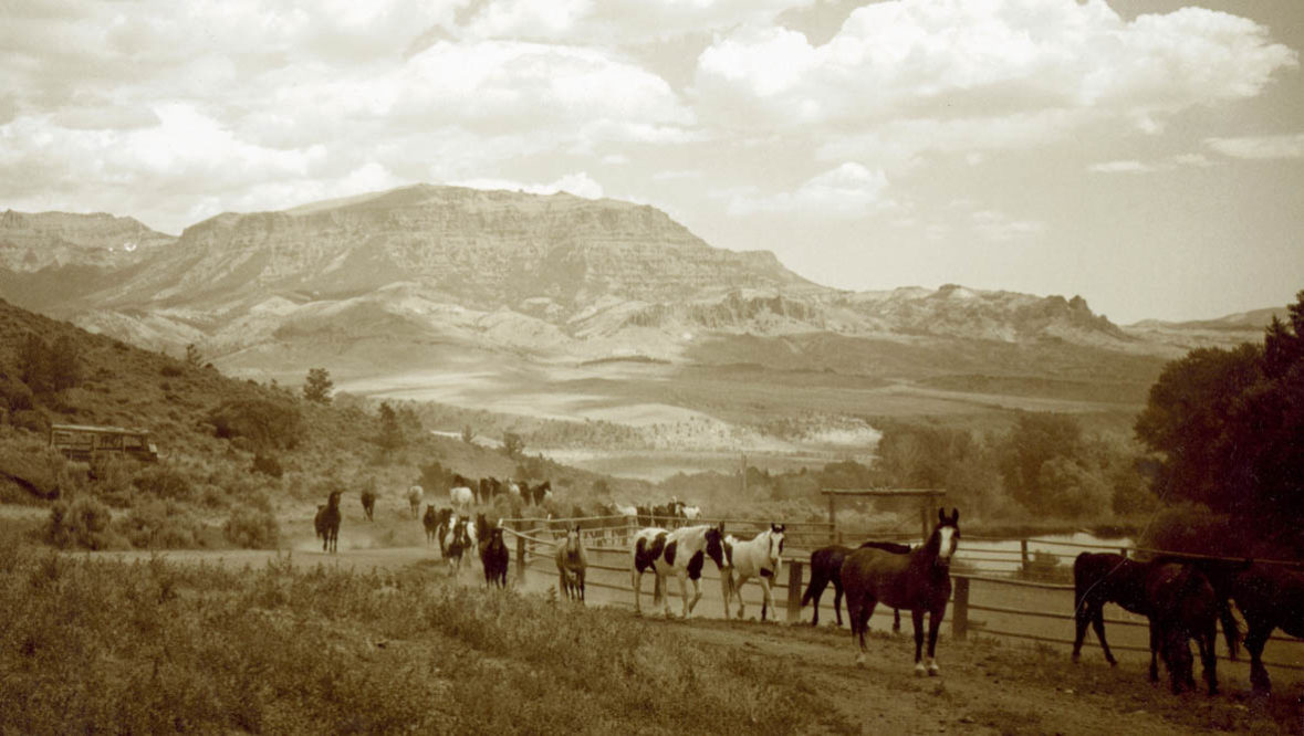 Historical black and white photo of horses at Rimrock Dude Ranch