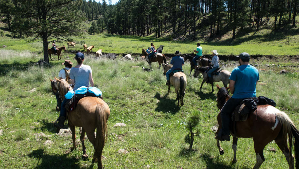 Cattle drive at Sprucedale Guest Ranch