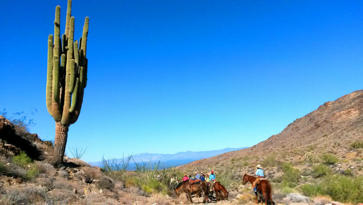 Cactus on a trail ride at Stagecoach Trails Guest Ranch