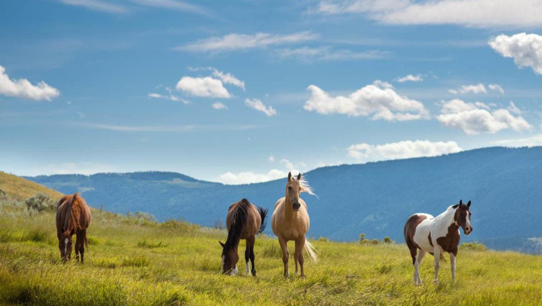 Sundance Guest Ranch horses in a field
