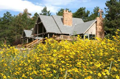 Sundance Trail Ranch cabin amongst yellow wildflowers