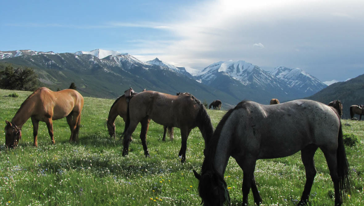Sweet Grass Ranch horses grazing in a field with mountains behind them