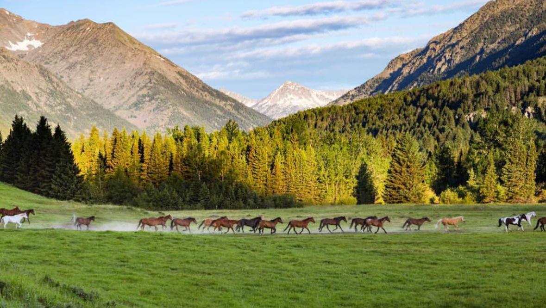 Sweet Grass Ranch horses running in a field