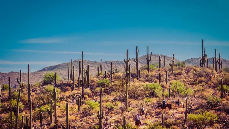 Tanque Verde Ranch cactus trail ride
