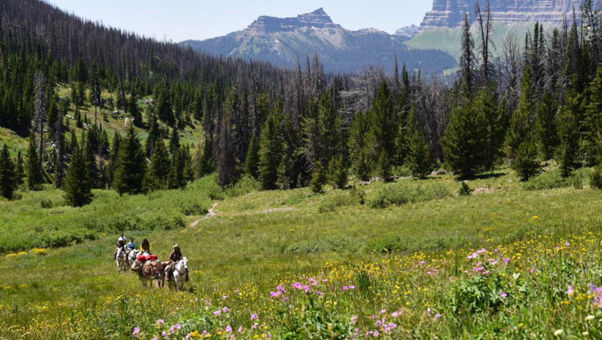 Triangle C trail ride amongst wildflowers