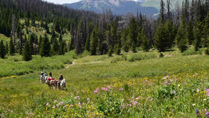Triangle C ride with wildflowers