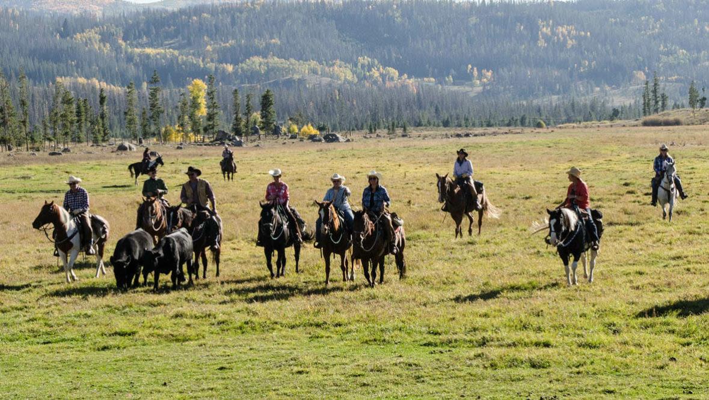 Vista Verde Cattle Drive