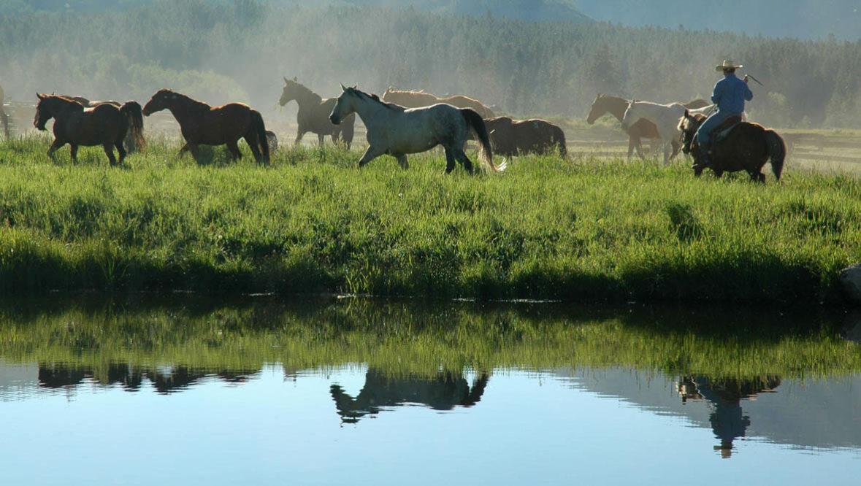 Vista Verde horses by a creek