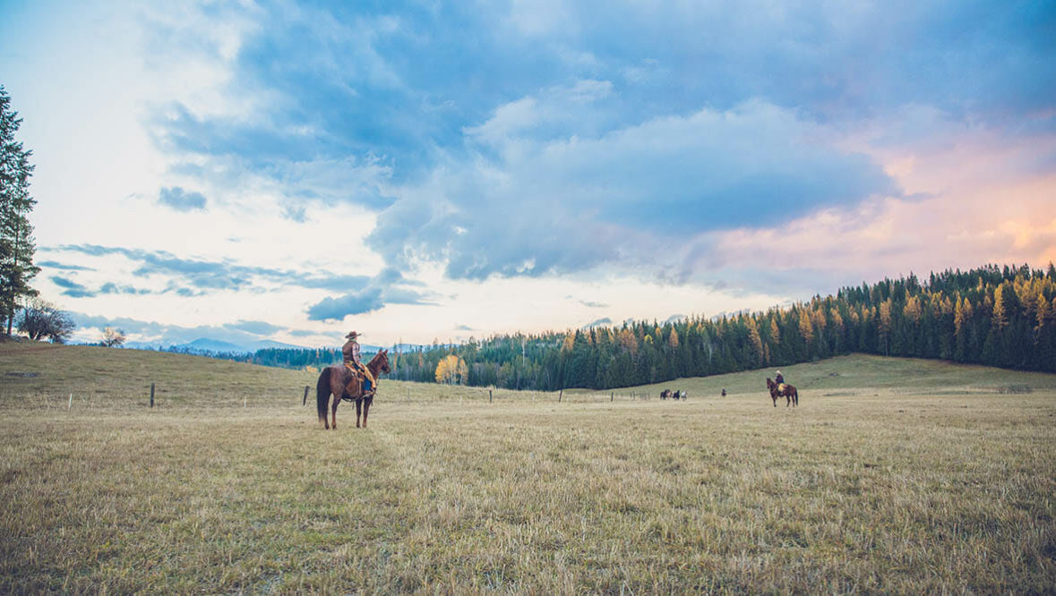 Cowboy on horse standing in an open field